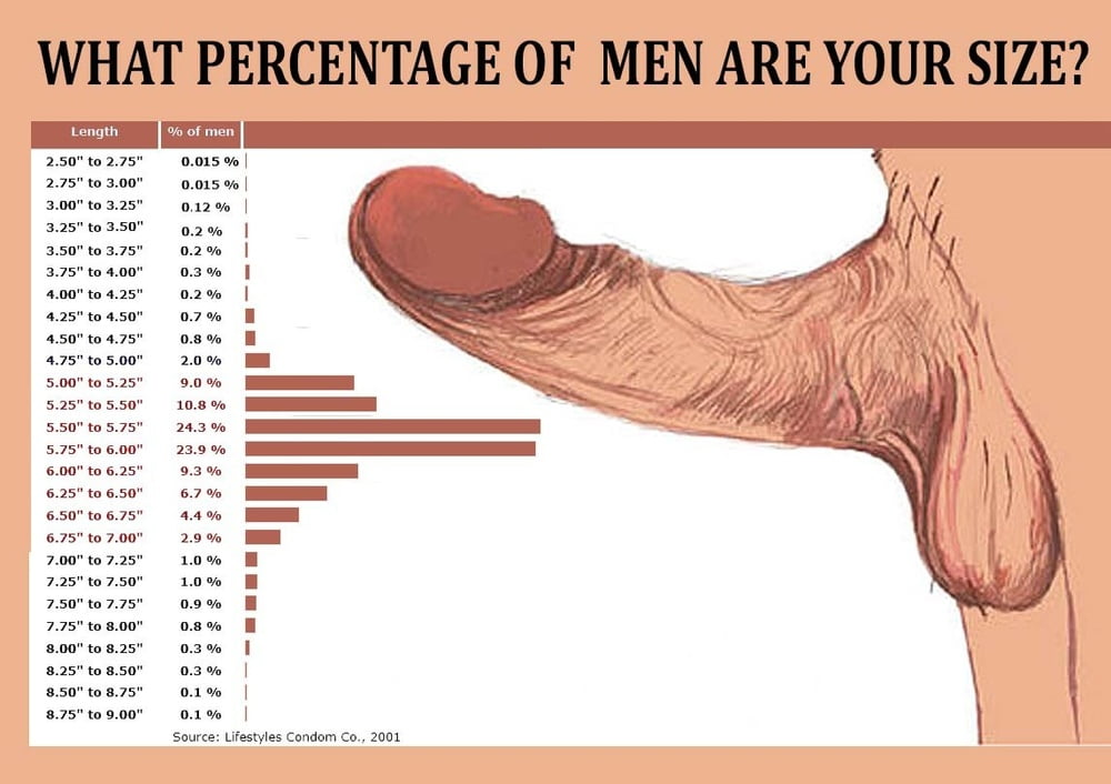 The length of the male urethra